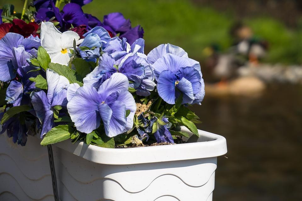 flower-box-4153057_960_720.jpg